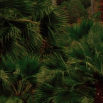 palmen-elba-kleiner-20